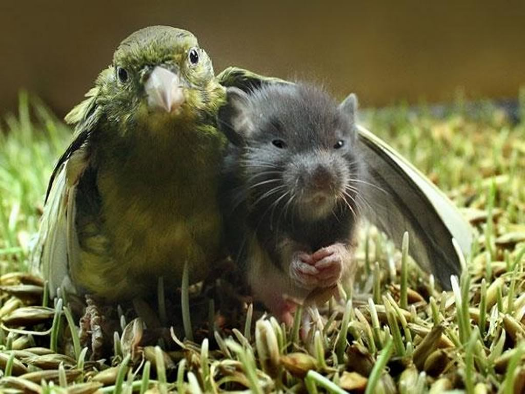 Bird and Mouse