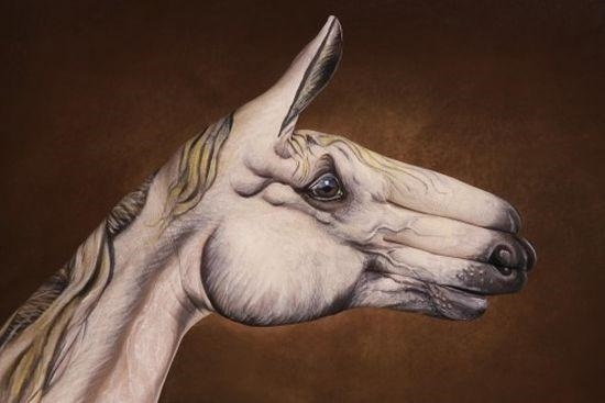 13 amazing hand drawings of animals you have to see pet orb