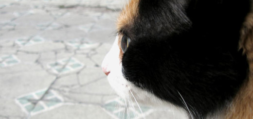 can cats cause Asthma