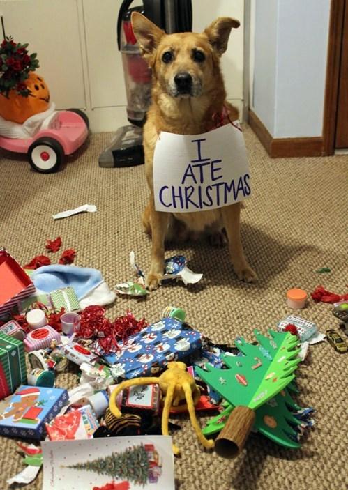 christmass dog