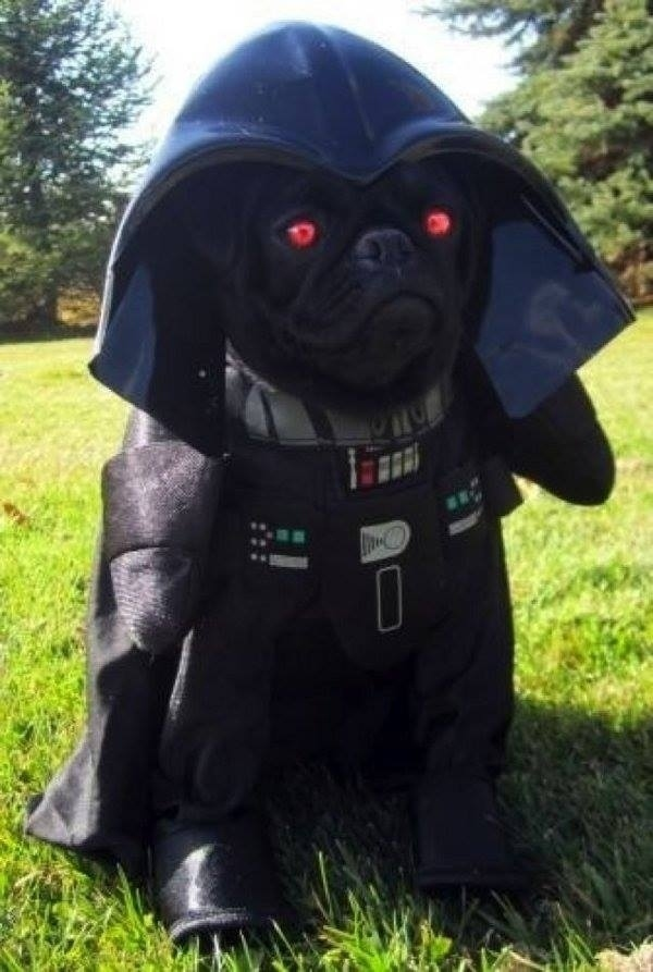 16 Of The Funniest Pug Costumes Ever Pet Orb