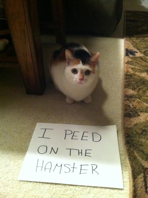 hamster pee
