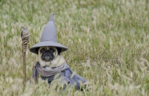 lord of the pugsd