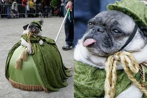 Really Bad Haircuts 16 Of The Funniest Pug...