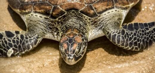sea turtle on land