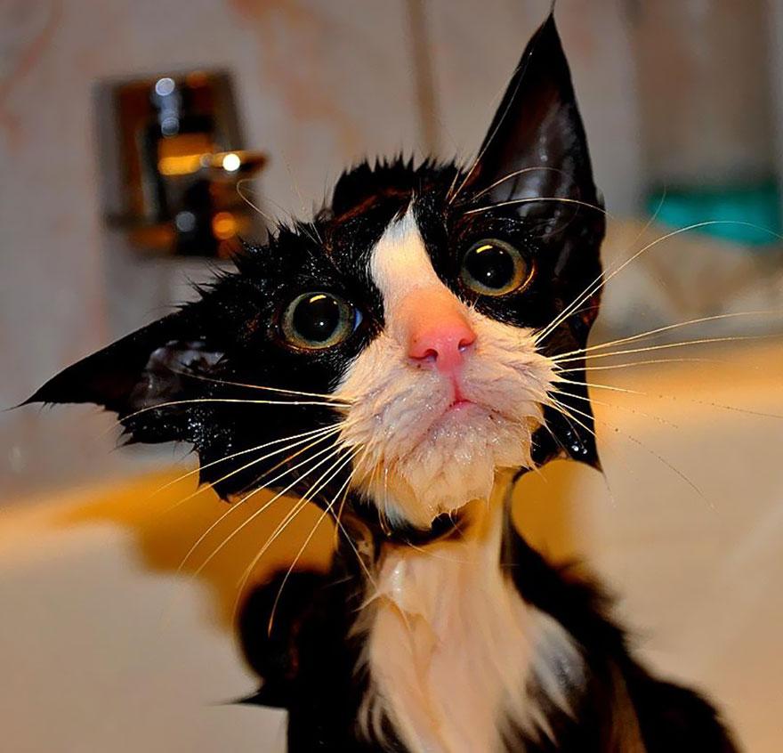 wet cat 1