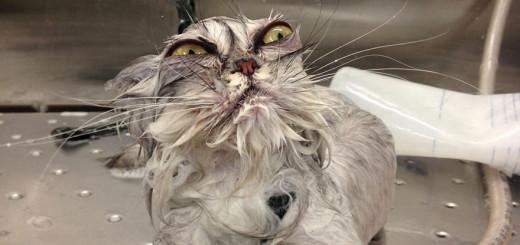 wet cat 4