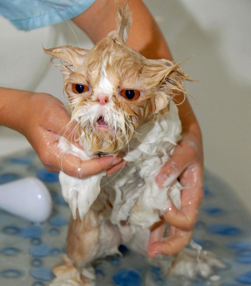 wet cat 6