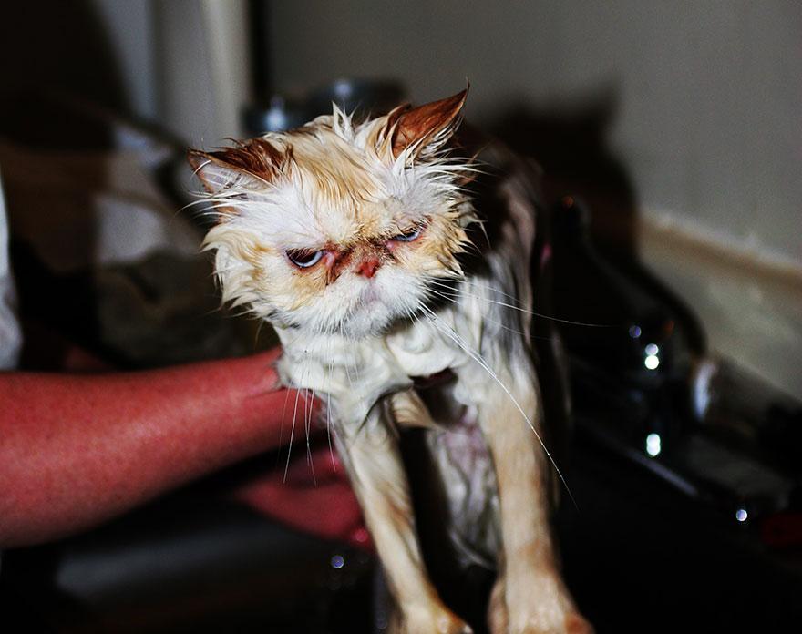 wet cat 7