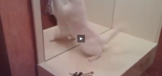 cat attacks mirror