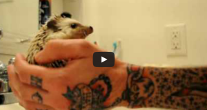 hedge hog bath