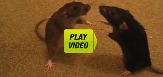 mice video