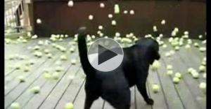 dog and balls