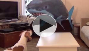 dog vs shark