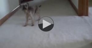funny bath dog