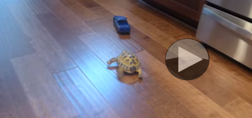 Tortoise vs. Truck