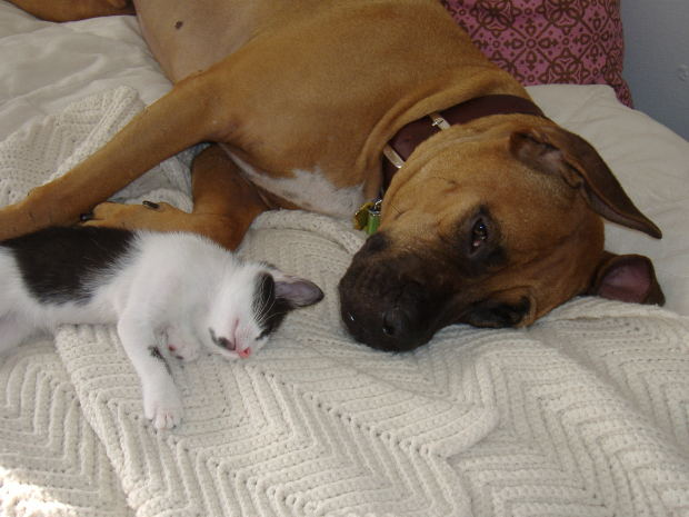 best flea protection for cats