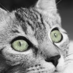 What Is In Cat Food