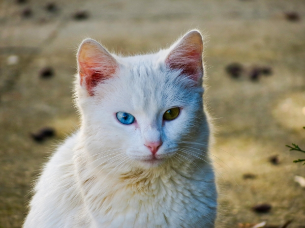 Can Cats On Urinary So Diet Eat Some Regular Food