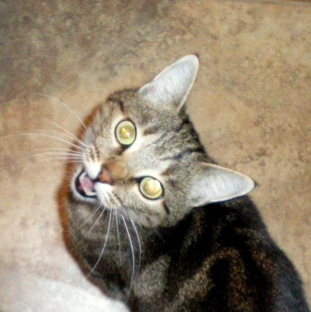 Can Cats Eat Aspirin