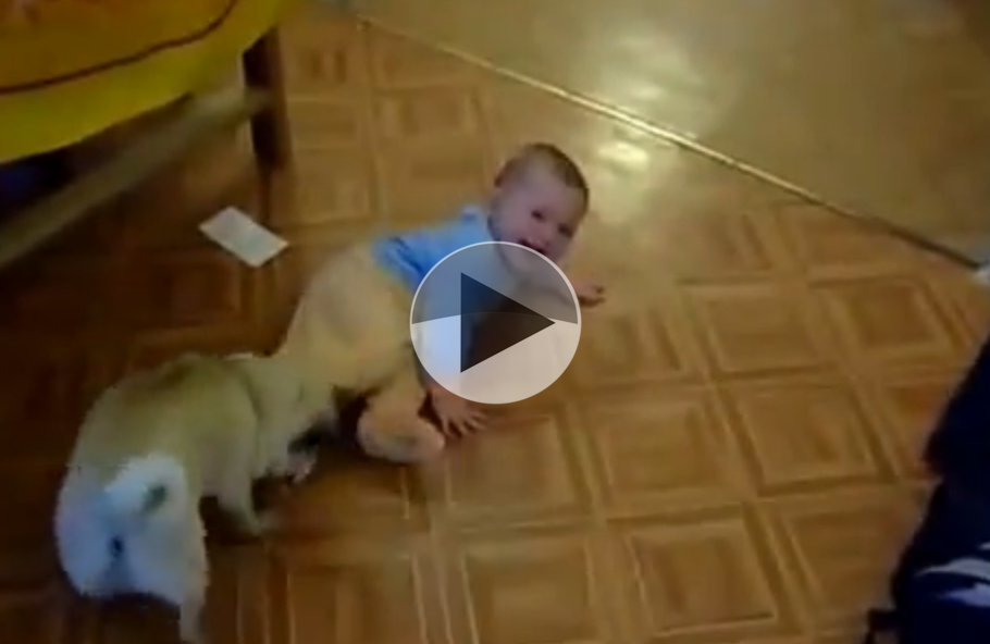 cute dog and baby