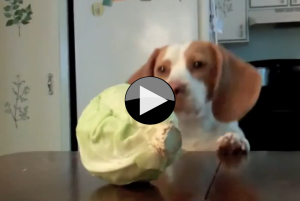 dog and cabbage