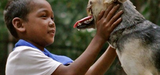 dog saves life