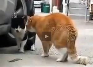 cat noise