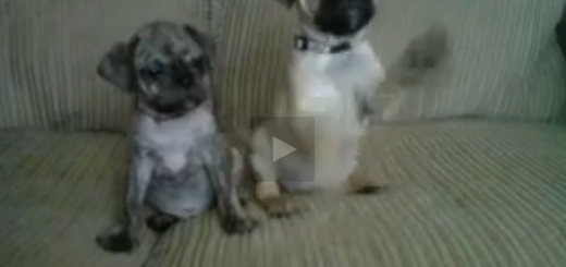 cute dogs react to noise