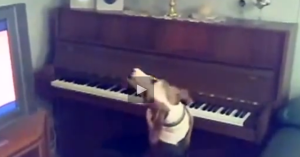 dog playing and singing