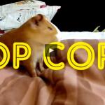 popcorn guinea pig
