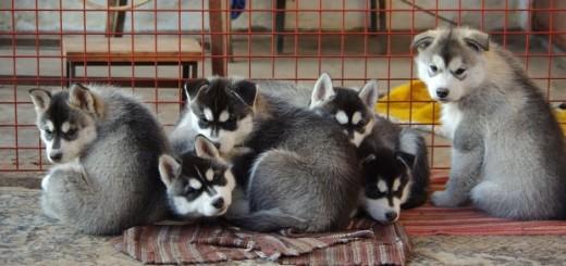 2014 top puppy names