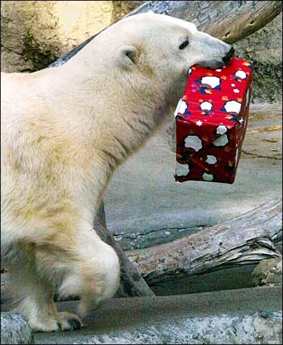 gifting bear