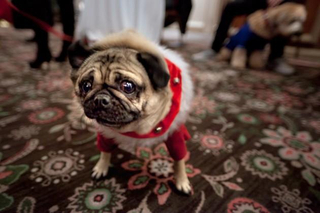 The 12 Cutest Christmas Animal Photos Ever! - Pet Orb