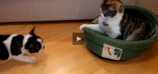 cat vs dog bed