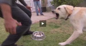 dog show down